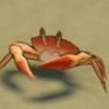 原神太阳蟹位置介绍