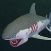 创造与魔法幼鲭鲨饲料介绍