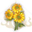 朝阳花花束